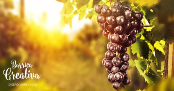 Cuales son las mejores añadas de vinos